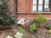 Dean Dunkle Tends a Seminary Garden
